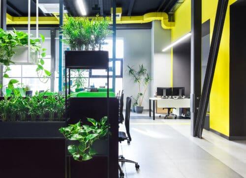Biophilic design – przyszłość w projektowaniu wnętrz biurowych